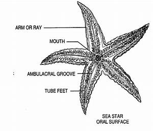 Starfish Labeled