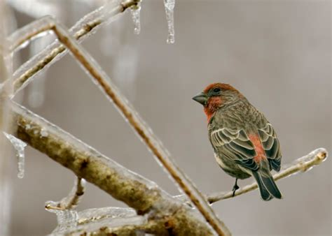 winter bird feeding how to help our feathered friends