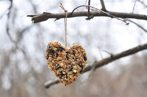 feeding birds tips and advice for taking care of birds