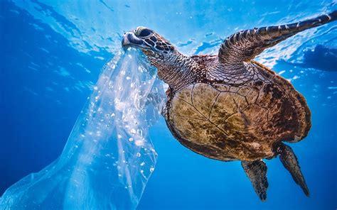 ocean cleanup   remove  plastic