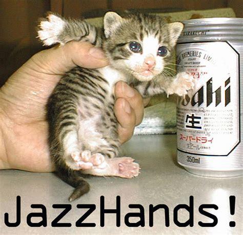 Funny Cat Pictures, Funny Cat Photos, Funny Cat Pictures
