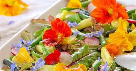 bourrache cuisine salade du jardin aux fleurs de bourrache et de capucine recettes bio et fait maison le