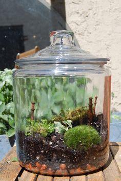moss in glass jar 1000 images about moss gardens on pinterest moss garden moss terrarium and terrarium