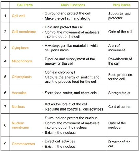 Cell Structures And Organelles Worksheet Worksheets For All  Download And Share Worksheets