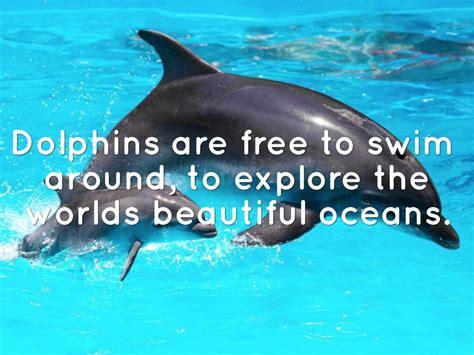 dolphins  msatsi satsi