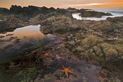 types  marine ecosystems