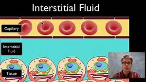 Diagram Of Interstitial Fluid