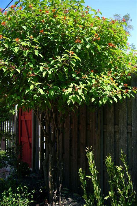 11 Best Fla Native Plants Images On Pinterest Florida