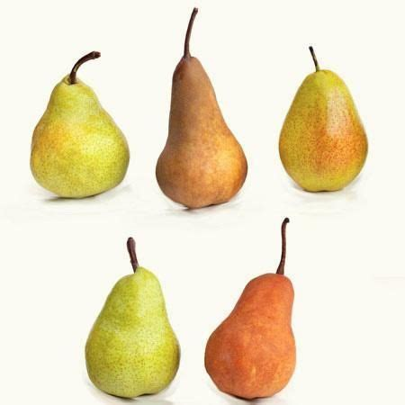 5-in-1 Pear Tree | Fast growing trees, Pear varieties ...