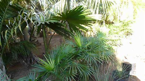 Mudas de variadas plantas e palmeiras à venda - contato ...