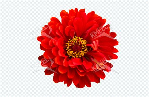 Images Transparent Background by Beautiful Flower On The Transparent Background Kmeel