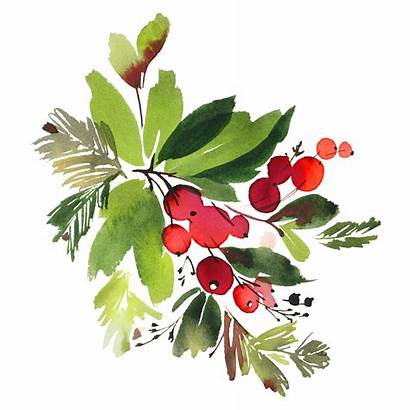 Watercolor Watercolour Christmas Flowers Berries Snowman Holly