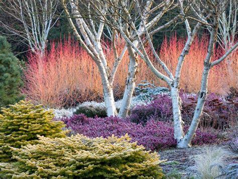 Winter Interest In Your Garden