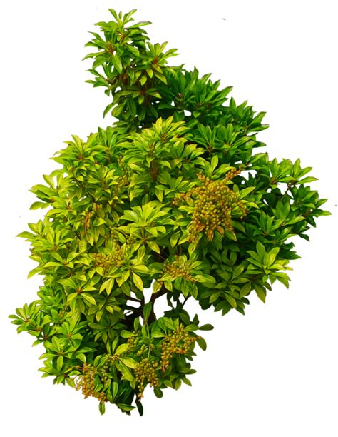 artificial weeping fig tree shrub 01 png by alz stock and deviantart com on