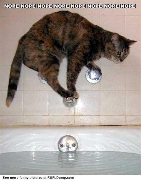 Can You Shower A Cat - nope human meme bath lol cat meme