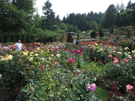 International Rose Test Garden with Heather - Not Your ...