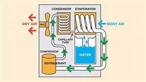 How Dehumidifiers Eliminate Basement Moisture
