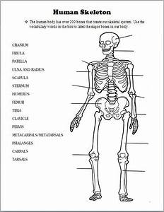 Printable Skeletal System Diagram Pdf