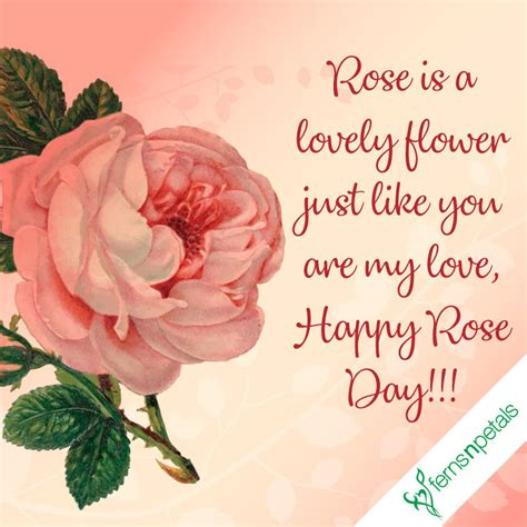happy rose day quotes wishes   rose day