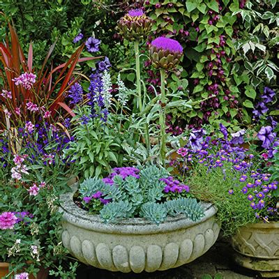 Patio Plants Container Gardening With Perennials The