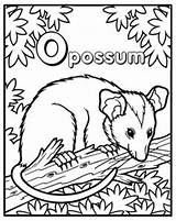 Possum Coloring Pages Opossum Phish Getcolorings Cake Printable Feed Cakecentral Need Opposum Books Roads sketch template