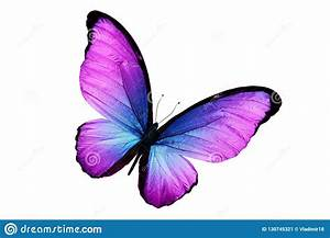 Beautiful Purple Butterfly Isolated On White Background ...