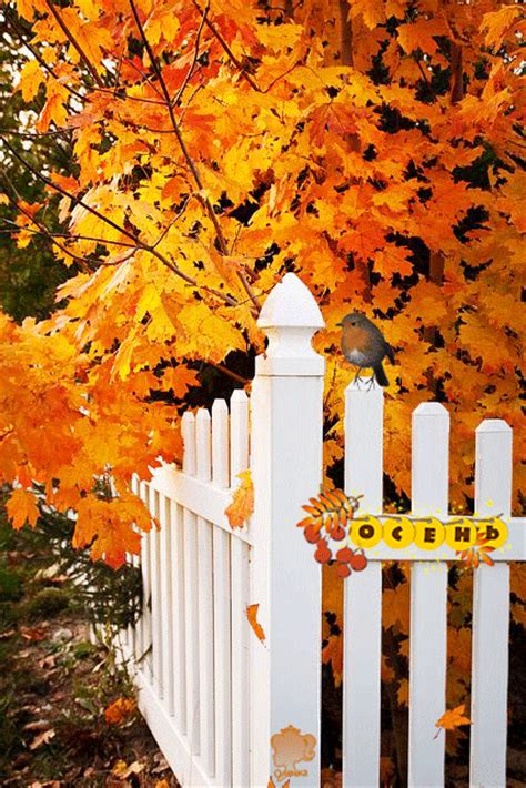 Autumn Around The Fence Pictures, Photos, and Images for