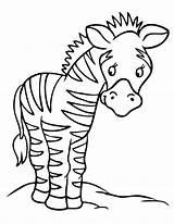 Zebra Coloring Animal Squirrel sketch template