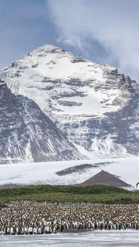 wallpaper antarctica mountains penguins  nature