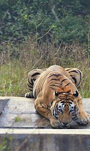 Wildlife sanctuaries in Rajasthan | Latest Travel Blogs ...