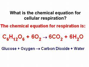 what is the equation for - 28 images - equation for weight ...