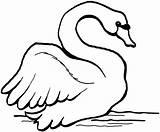 Swan Coloring Cisnes Imprimir Cisne Gans Desenhos Colorir Swans Colouring Neigt Hals Colorear Coloriage Cygne Imagenes Malvorlagen Printable Tiere Mute sketch template