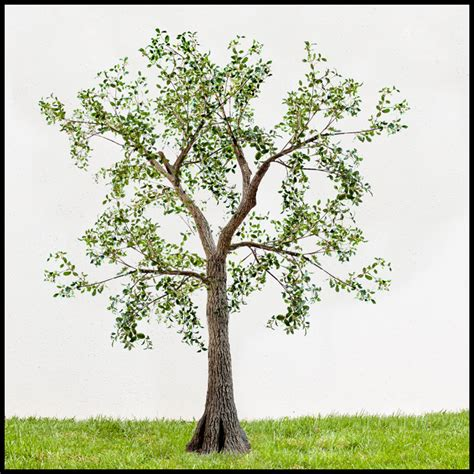 Outdoor Artificial Trees, Exterior Silk Trees, Outdoor. Video Game Room Furniture. Dorm Room Refrigerator. Virtual Room Decorator. Laundry Room Rugs. Dinning Room Table. Mexican Decorations. Wilton Decorating Bags. Laundry Room Design Ideas