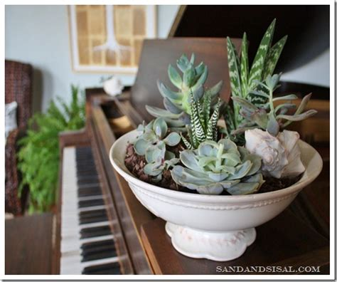 Serenity Now Indoor Gardening With Succulents