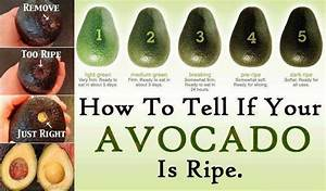 Avocado Perhaps The World S Most Perfect Food