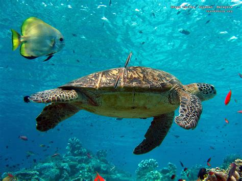 Images Of Turtles Turtles Images Turtle Hd Wallpaper And Background Photos