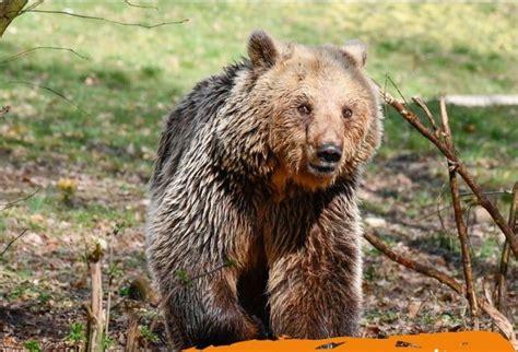 Dushi, ariu shqiptar i mbijetuar, e zgjat shumë g - Syri | Lajmi i fundit