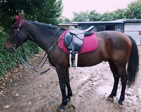 dati cavalli cavallo castrone vendita cavalli a bergamo