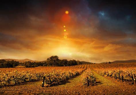 wine   night    margaret river wine region