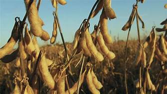 China commits to buy more U.S. soy…