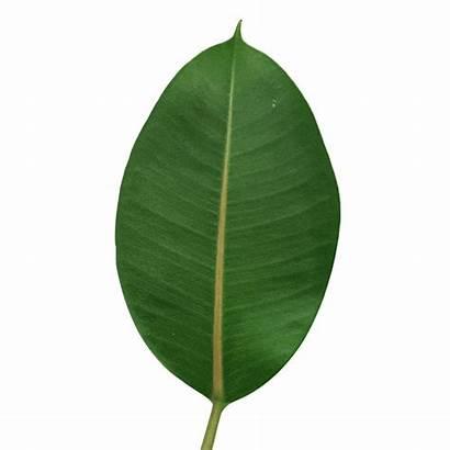 Leaf Turning