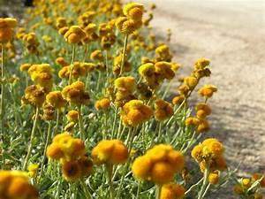 Средства сборы трав для похудения
