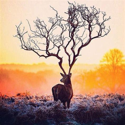 5 neparastas dzīvnieku bildes, pateicoties foto ...