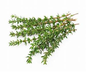 Herbs Fresh Thyme - pkt - WA Fresh Delivered