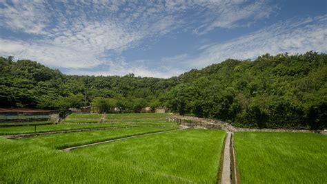 landscape picture rice field nakamura masakatsu photo p m lydon cc by sa patrick m lydon