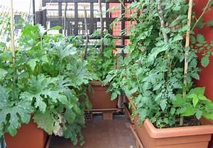 obst und gemuse richtig einpflanzen obi berat With whirlpool garten mit dünger gemüse balkon