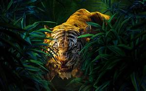 Shere Khan The Jungle Book Wallpapers