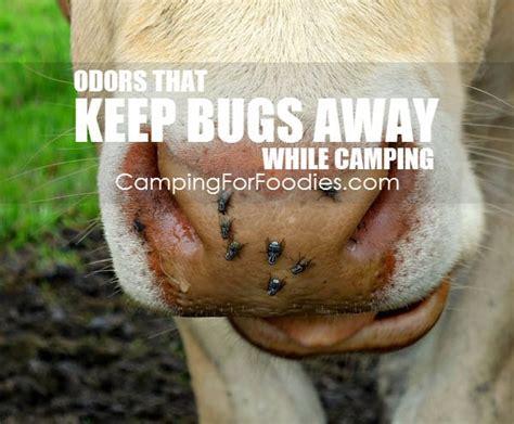 bugs   camping    enjoy