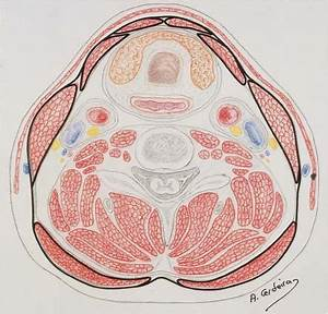 Rationale And Anatomical Basis For Functional And