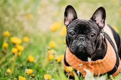 Bulldog Names Dog Male Female
